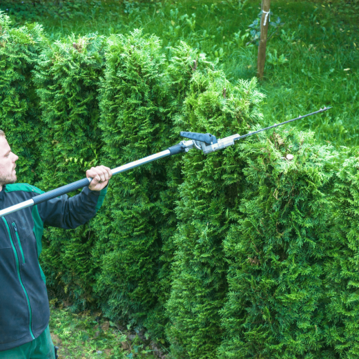 hedge trimming being carried out in Folkestone