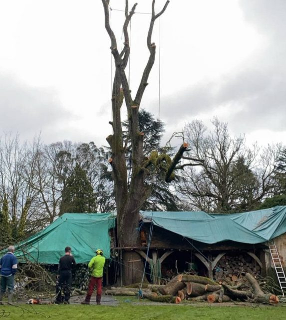 Tree surgery being carried in Folkestone Kent